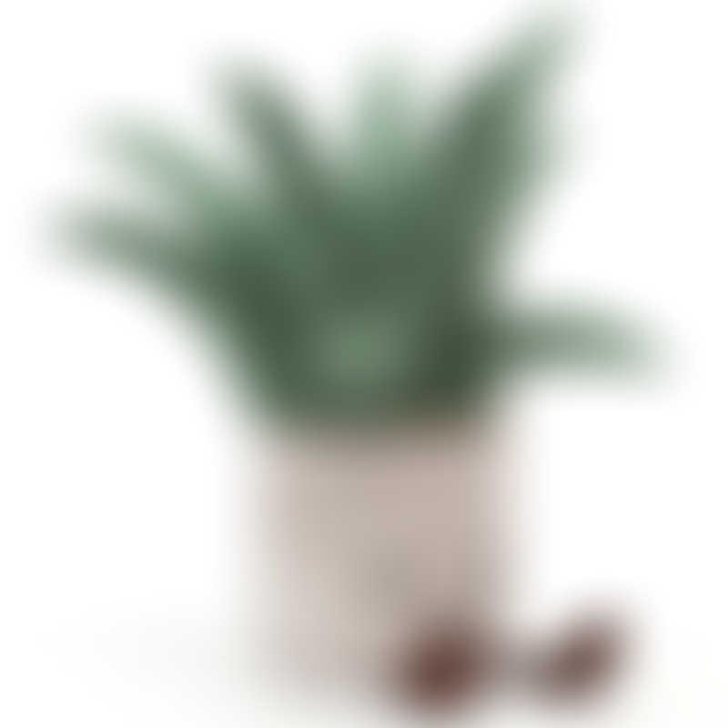 Jellycat Amuseable Aloe Vera 45cm