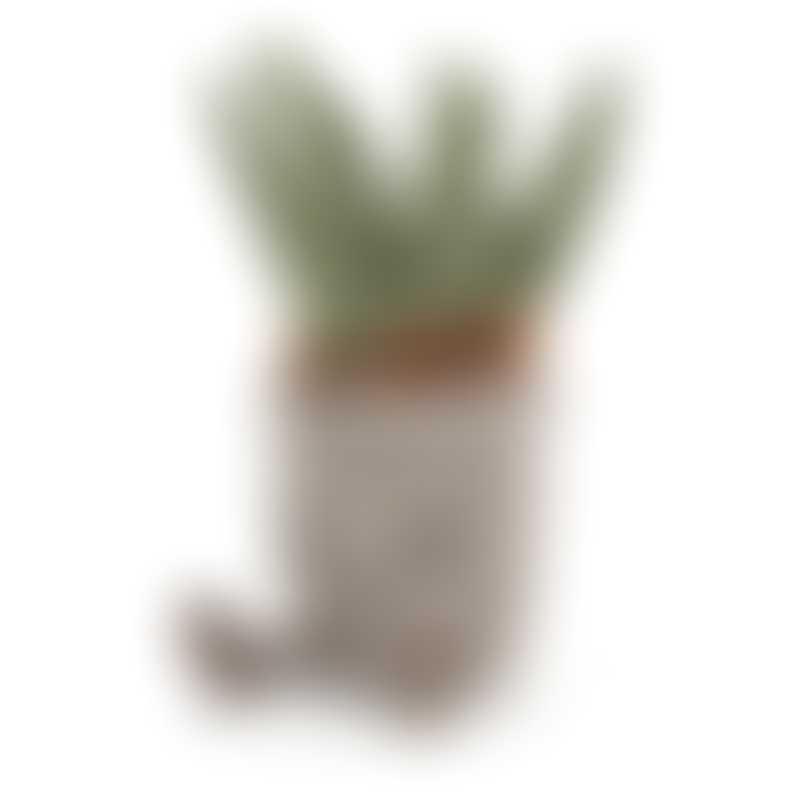Jellycat Silly Succulent Aloe 20cm
