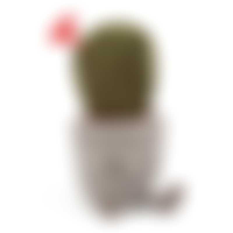 Jellycat Silly Succulent Cactus 19cm